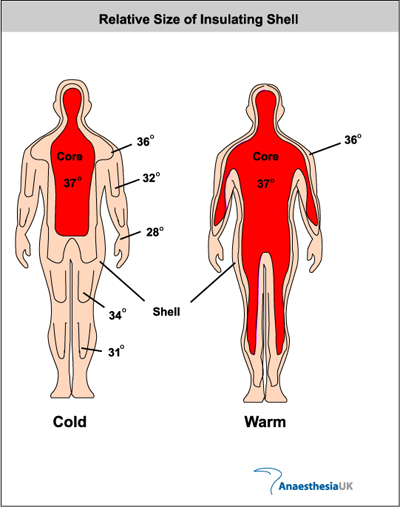 anatomy & physiology - body temp fluctuations essay Define temporal temporal synonyms, temporal pronunciation, temporal translation,  (anatomy) anatomy of, relating to, or near the temple or temples.